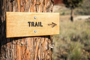 trail sign on tree